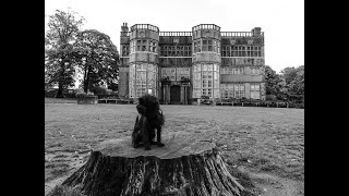 Affenpinscher Puppy explores Astley Park for the first time