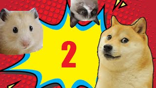 Śmieszne zwierzęta #2 DŁUŻSZE