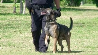 Police K9 Unit - Nighttime Search Exercises On Miami Beach