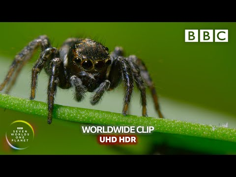 Mate Or Die Trying! - Seven Worlds, One Planet | BBC Earth