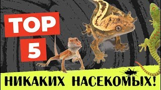 Рептилии, не нуждающиеся в кормлении насекомыми