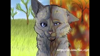 Коты Воители: Белка, Ежевика, Уголёк.