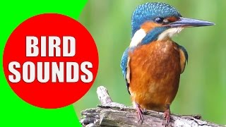 Bird sounds for kids - PART 1 - Bird Identification: Childre...