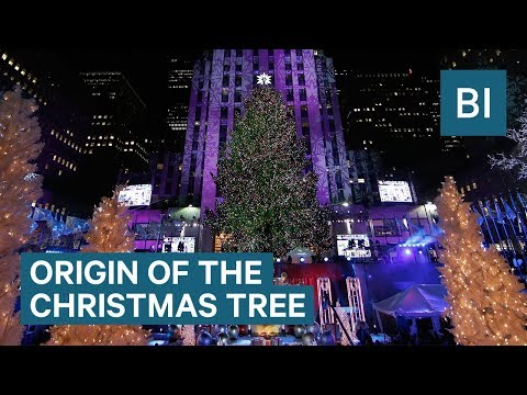Amy Lynn - 2019 Trends In Christmas Trees!!