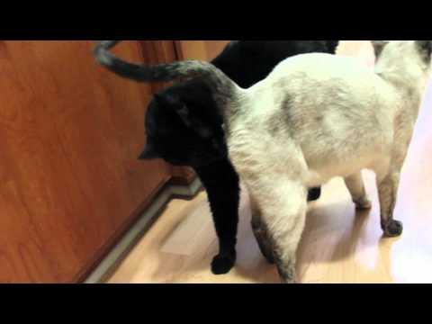 N2 The Talking Cat S1 Ep3 - Kona is stinky