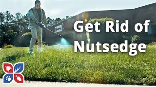 Do My Own Lawn Care  -  How to Get Rid of Nutsedge