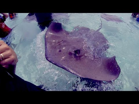 STINGRAY CITY! Swimming with Stingrays in the Cayman Islands (Part 2)