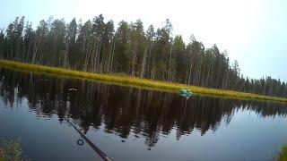 Карелия Август Рыбалка на поплавок и спиннинг на маленькой ламбушке Олень