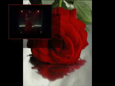Segunda Rosa do Oriente - Afonso Estebanez