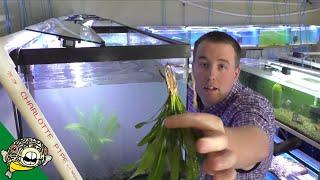Discus Fish Tank Setup Daily Dose #12