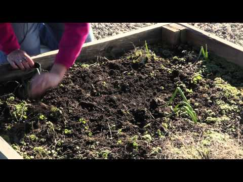 How to Plant a Peppermint Garden : Great Gardening Advice