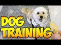 Dog Training Session with MY PUP!