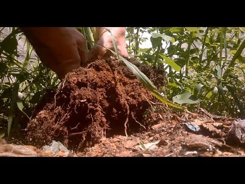 Land Drain How To Make A Trench From Natural Resources