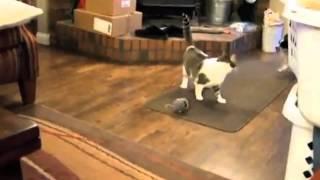 Хорошие забавные и занятные видео с участием котов и собак