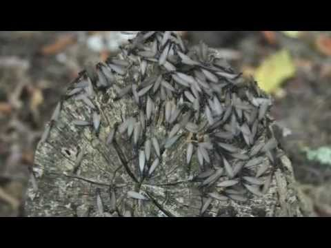 C mo puedo saber si tengo termitas en mi casa asurekazani - Termitas en casa como matarlas ...