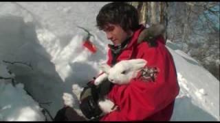 Охота на зайца, как поймать зайца руками?