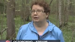 Смотреть видео Телеканал «Санкт-Петербург» Программа «Новости» онлайн