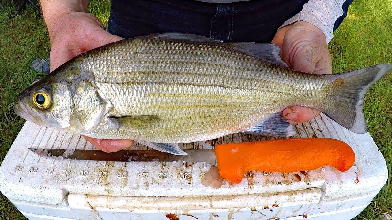 What to catch white carp 60