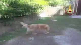 إنقاذ كلب بعد 10 أيام من تحت انقاض زلزال إيطاليا