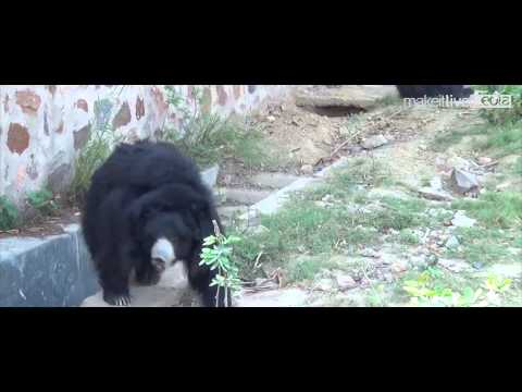 National Zoological Park Delhi | Delhi Zoo Documentary Movie In (HD)