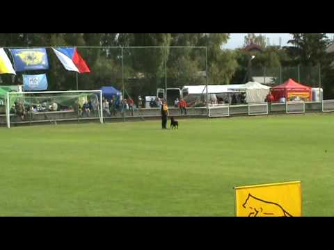 Rottweiler World Championship 2009 Obedience