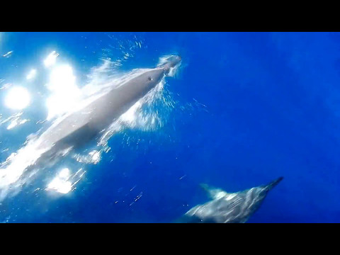 Spinner Dolphins Lanai