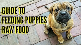 Guide To Feeding Puppies RAW Food