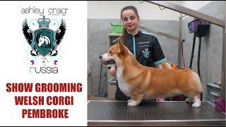 Show grooming for welsh corgi pembroke with #AshleyCraig