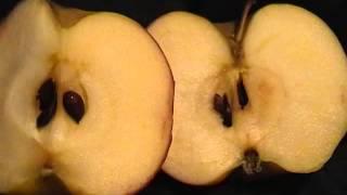Односеменные и многосеменные  плоды