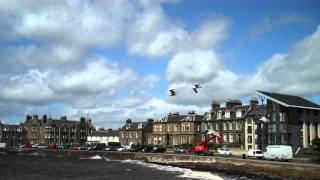 Seagulls Gliding Strong Wind Broughty Ferry Scotland