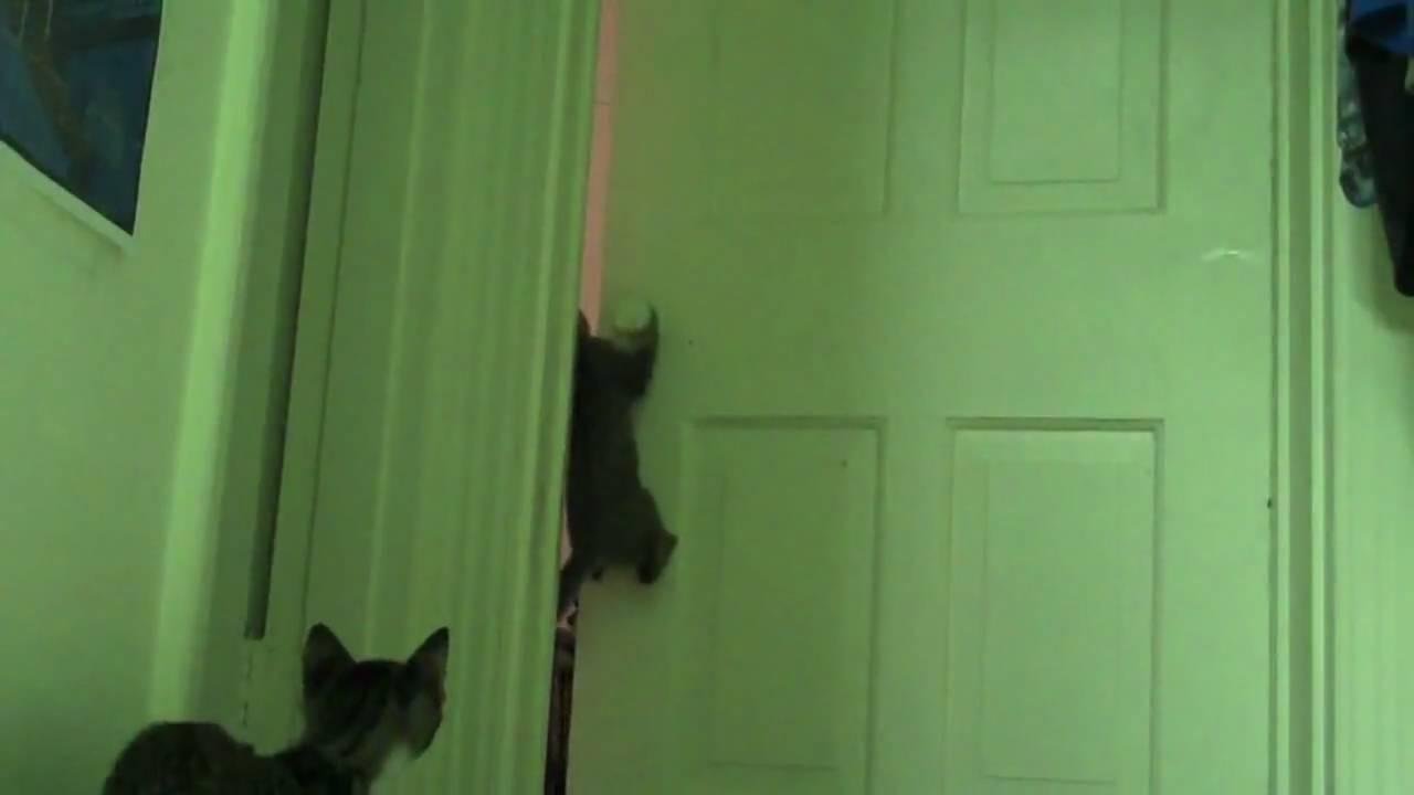 Buzz the door opening Kitten... EXPLODING!!! & Buzz the door opening Kitten... EXPLODING!!! - YouTube