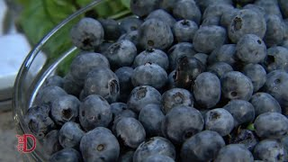 Blue Gold: Making the Most of Your Ontario Blueberries