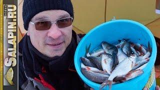 Зимова риболовля. Плотва на поплавок і мормишку, трудова рибалка. [salapinru]