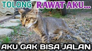 Kenali gejala kucing terinfeksi FPV (Feline Panleukopenia Virus)/distemper.