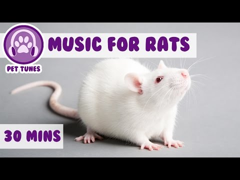 Music for Rats, Calm Your Rats, How To Make Rats Sleep, How to Calm Down Rats