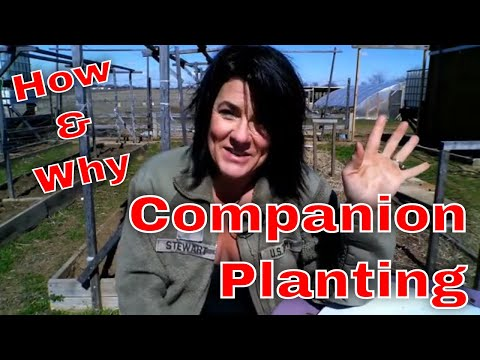 Easy Steps to Get Started Companion Planting 1