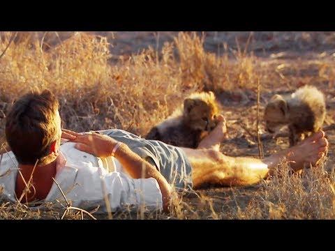Relation exceptionnelle avec des guépards - ZAPPING SAUVAGE