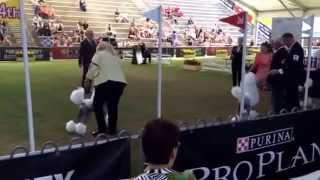 via YouTube CaptureSydney Royal Dog Show 2014 Standard Poodle Best ...