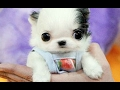 Cute Baby Animal Videos Compilation 2017 [BEST OF]
