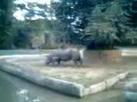 Rhinoceros,Alipore Zoo,Kolkata,India