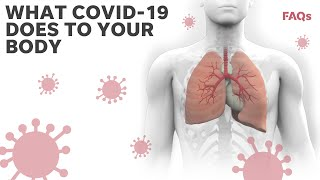 Here's how coronavirus attacks the body   Just the FAQs: Deep Dive