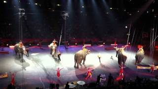 2011 RINGLING BROS. AND BARNUM & BAILEY CIRCUS ELEPHANTS TAMPA, FL