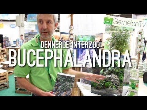 Bucephalandra Pflanzen | Dennerle Pflanzen | GarnelenTv