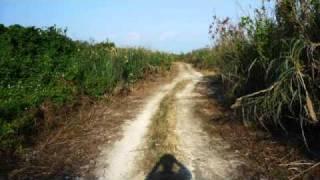 喜界島。特攻花、スギラビーチ、荒木中里遊歩道