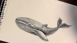 Рисунок кита.