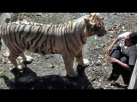 NATIONAL ZOOLOGICAL PARK | ZOO | NEW DELHI | it's me tour