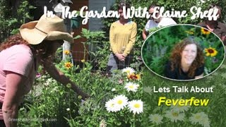 Green Path Herb School - Herbalist Elaine Sheff talks about Feverfe...