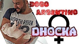 DOGO ARGENTINO - DOCHKA (DOÇKA) İLK VİDEO