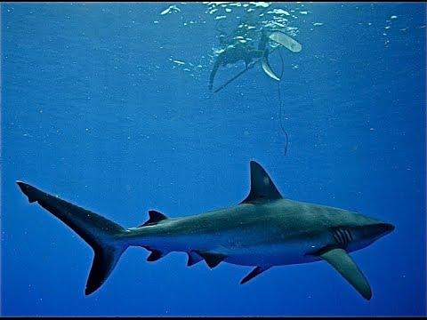Spearfishing Australia - Coral Sea - ADRENO