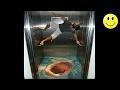 Download lagu Best Of Elevator Pranks | Ultimate Elevator Funny Scare Prank Compilation 2016